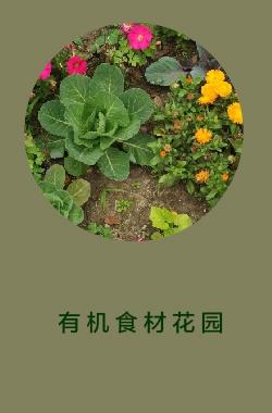 有机食材花园